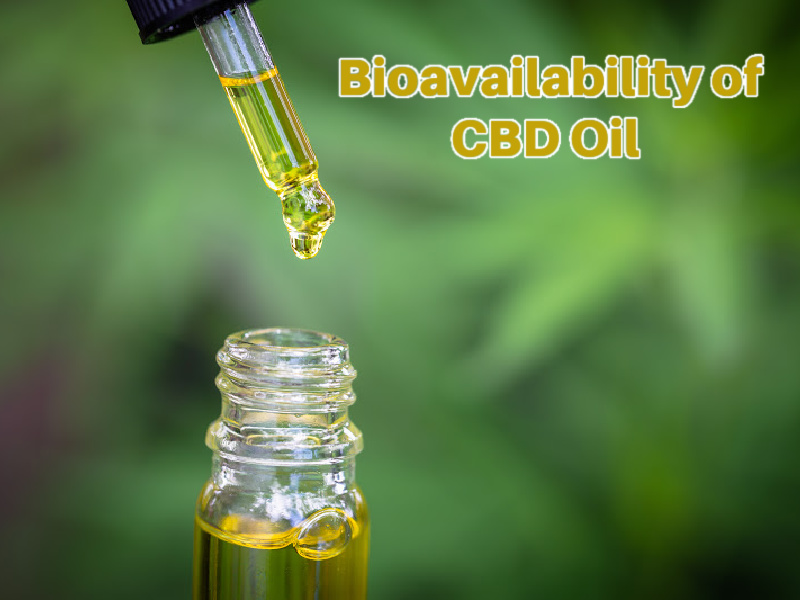 Bioavailability of CBD Oil