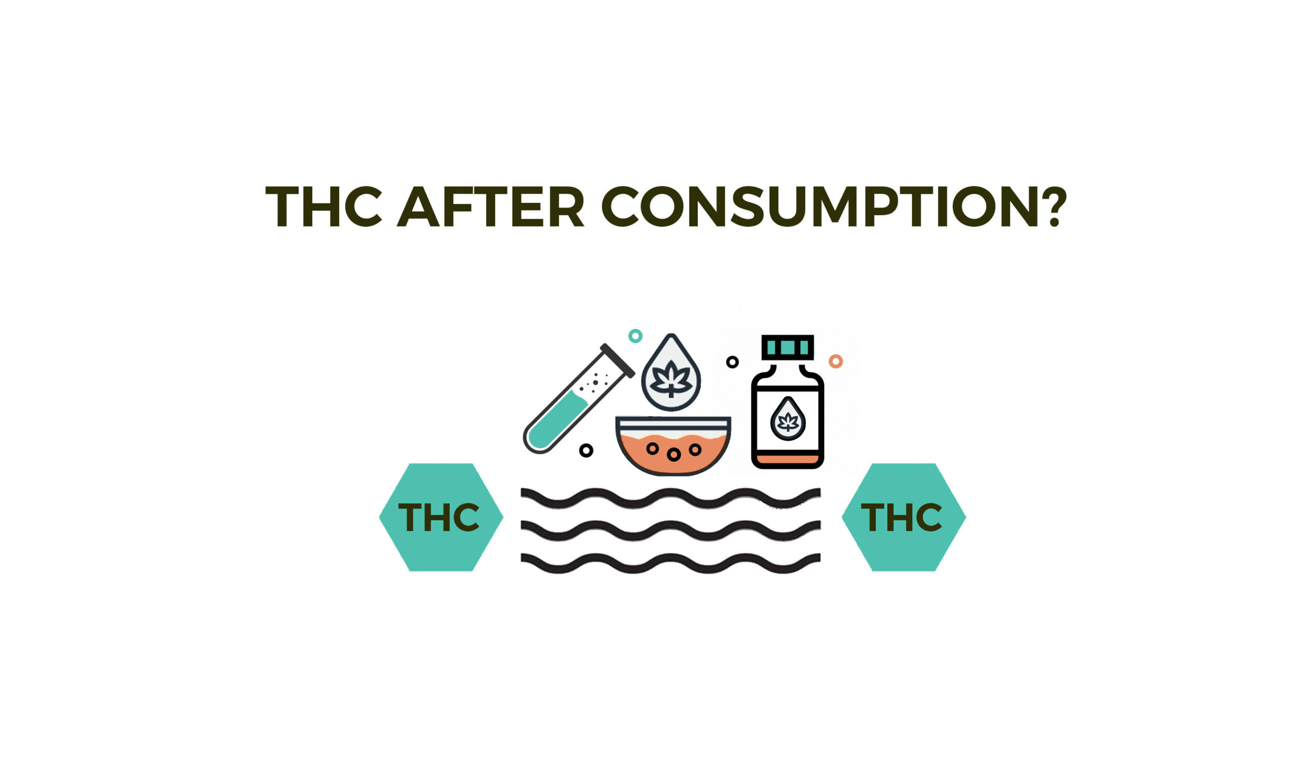 What Happens To THC After Consumption