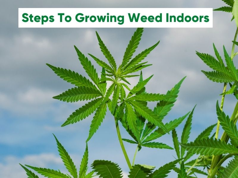 Steps To Growing Weed Indoors